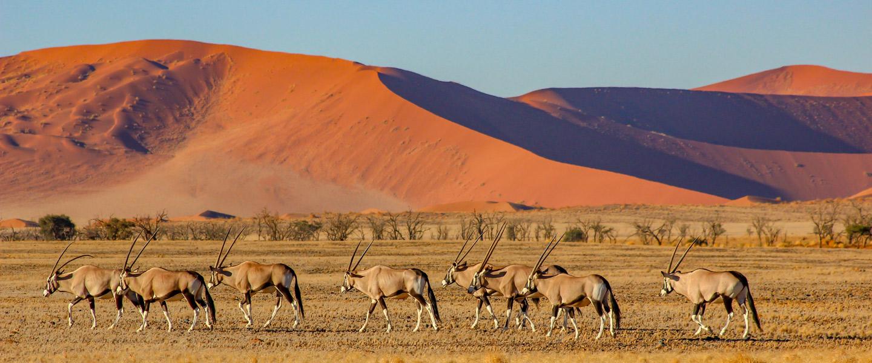 Namibia 2019